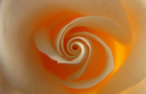Spiral in nature welcome to sacred spirals